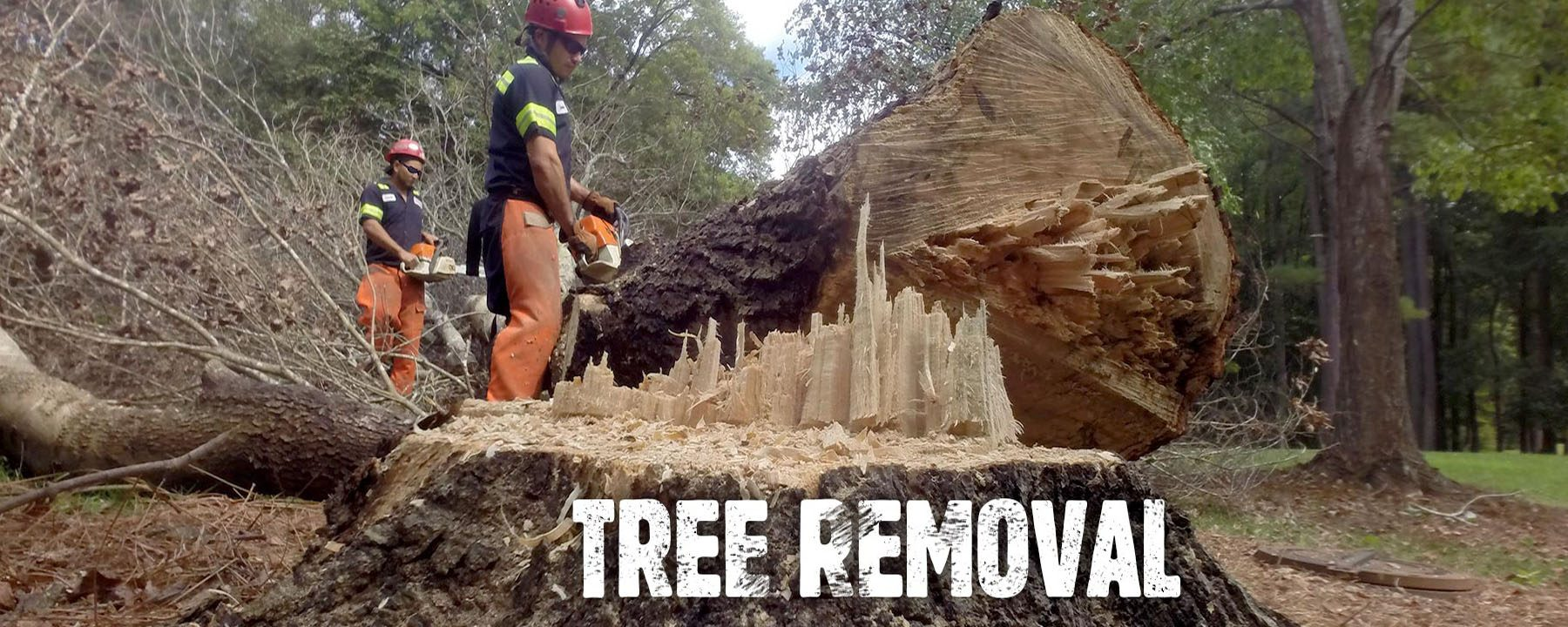 Tree Cutting & Removal Services!