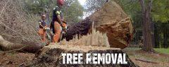 A&S Tree Removal Company!